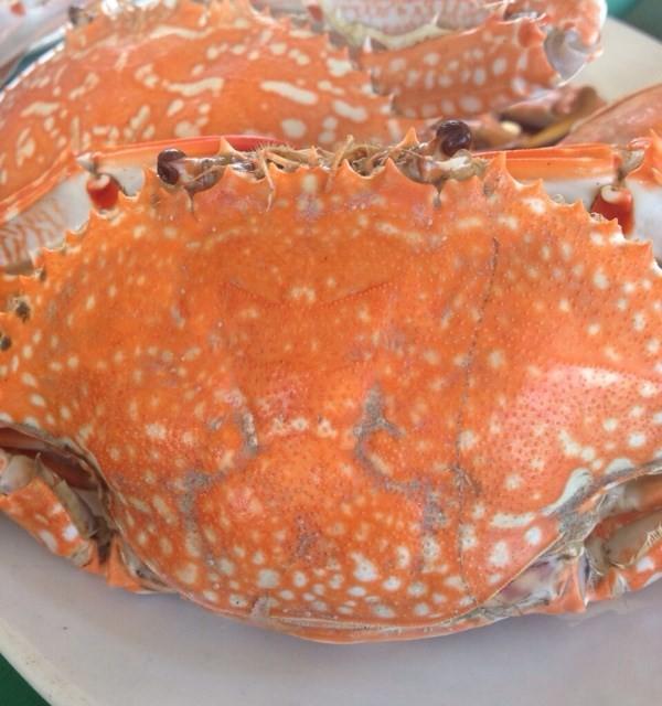 ปูนึ่ง - ทะเลเผาบางอ้อ - Thai food - general - Bang O - Bangkok
