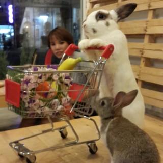 dari Rabbito' Cafe' (บางจาก) di บางจาก |Bangkok