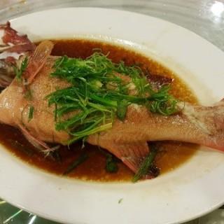 蒸東星斑 - 位於香港仔的海東軒 (香港仔) | 香港